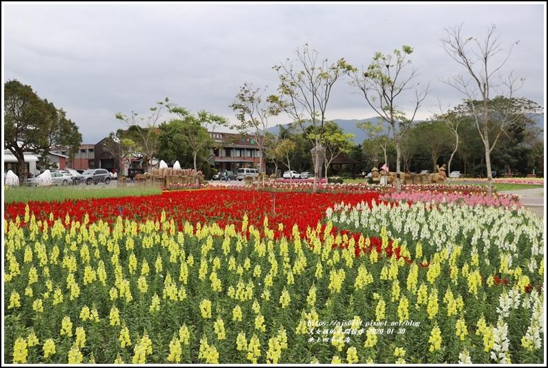 池上四季花海-2020-01-26.jpg