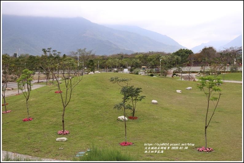 池上四季花海-2020-01-37.jpg