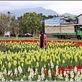 池上四季花海-2020-01-35.jpg