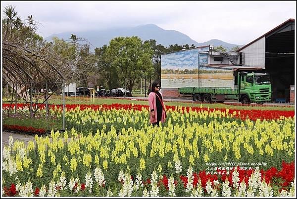 池上四季花海-2020-01-36.jpg