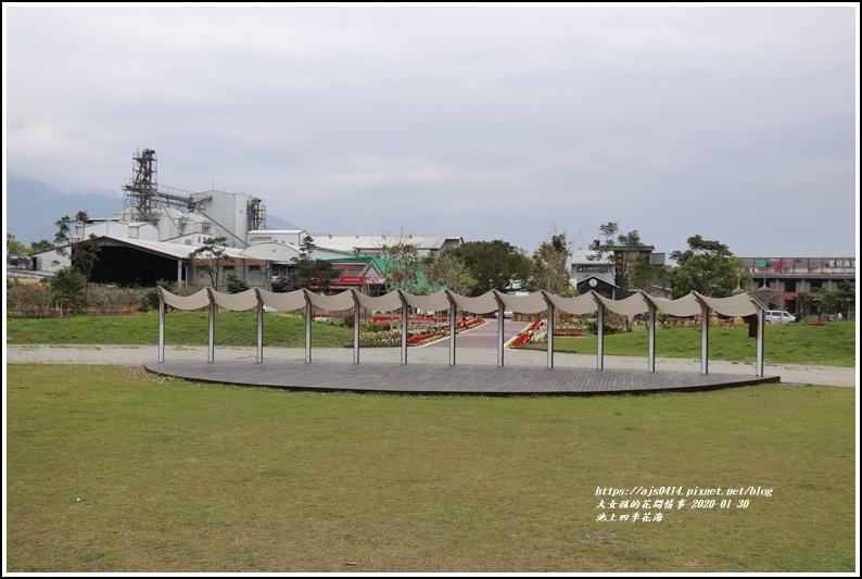 池上四季花海-2020-01-40.jpg