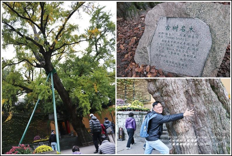 江蘇無錫錫惠公園-2019-11-46.jpg