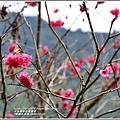 鳳林櫻花步道-2020-02-05.jpg