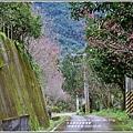 鳳林櫻花步道-2020-02-09.jpg