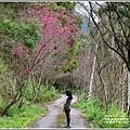 鳳林櫻花步道-2020-02-17.jpg