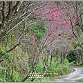鳳林櫻花步道-2020-02-15.jpg