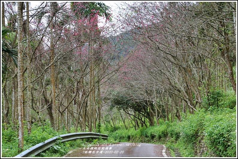 鳳林櫻花步道-2020-02-24.jpg