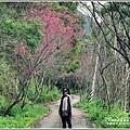 鳳林櫻花步道-2020-02-32.jpg