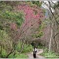 鳳林櫻花步道-2020-02-33.jpg
