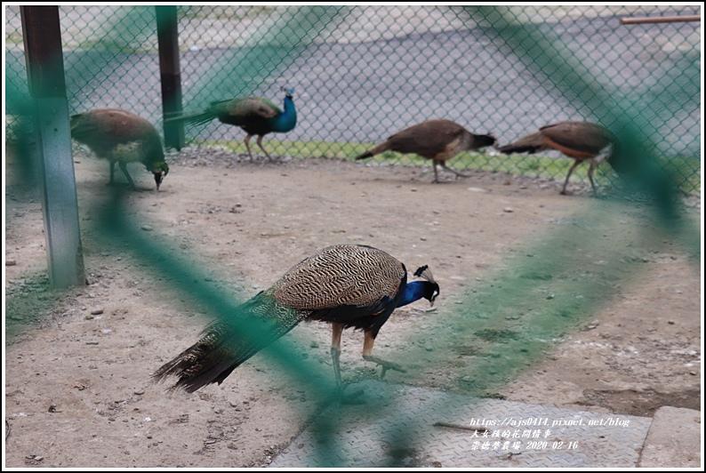 崇德瑩農場-2020-02-51.jpg