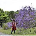 錫葉藤(許願藤)-2020-03-06.jpg