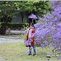 錫葉藤(許願藤)-2020-03-08.jpg