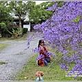 錫葉藤(許願藤)-2020-03-10.jpg