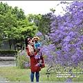 錫葉藤(許願藤)-2020-03-09.jpg