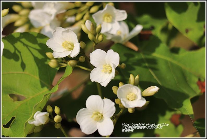 富源桐花-2020-03-30.jpg
