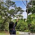 花蓮林務局南華工作站桐花-2020-03-11.jpg
