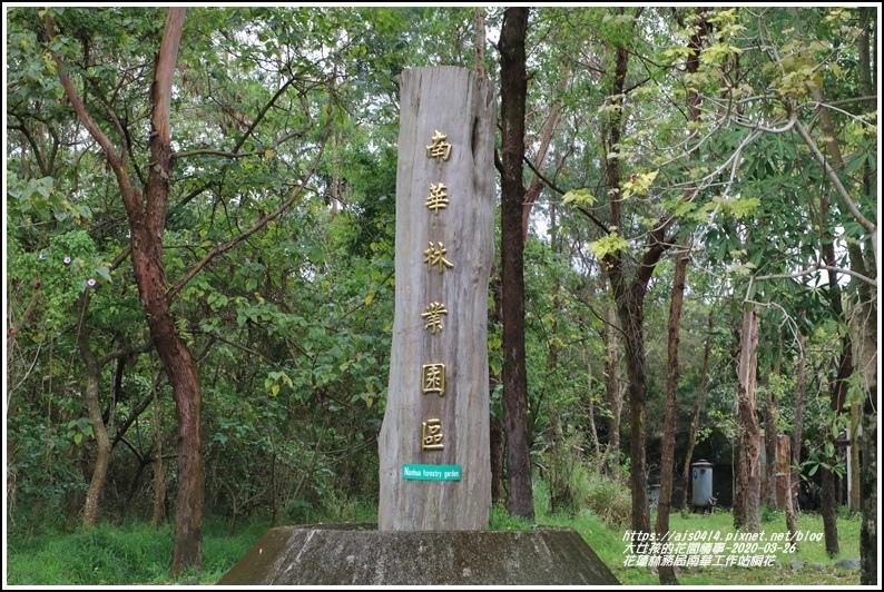 花蓮林務局南華工作站桐花-2020-03-36.jpg