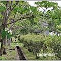 花蓮林務局南華工作站桐花-2020-03-46.jpg