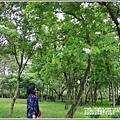 花蓮林務局南華工作站桐花-2020-03-55.jpg