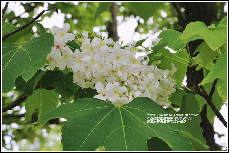 花蓮林務局南華工作站桐花-2020-03-61.jpg
