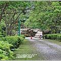 花蓮林務局南華工作站桐花-2020-03-71.jpg