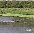 玉里啟模濕地-2020-03-16.jpg