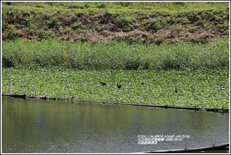 玉里啟模濕地-2020-03-15.jpg