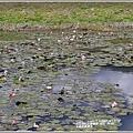 玉里啟模濕地-2020-03-19.jpg