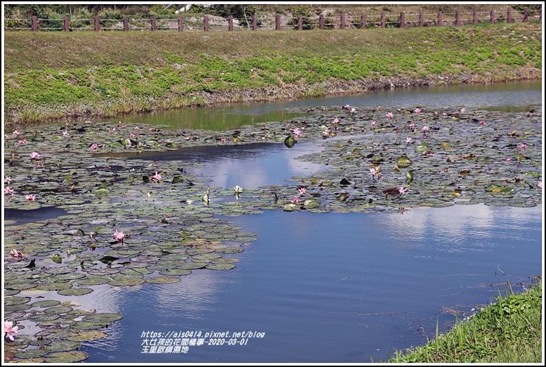 玉里啟模濕地-2020-03-20.jpg
