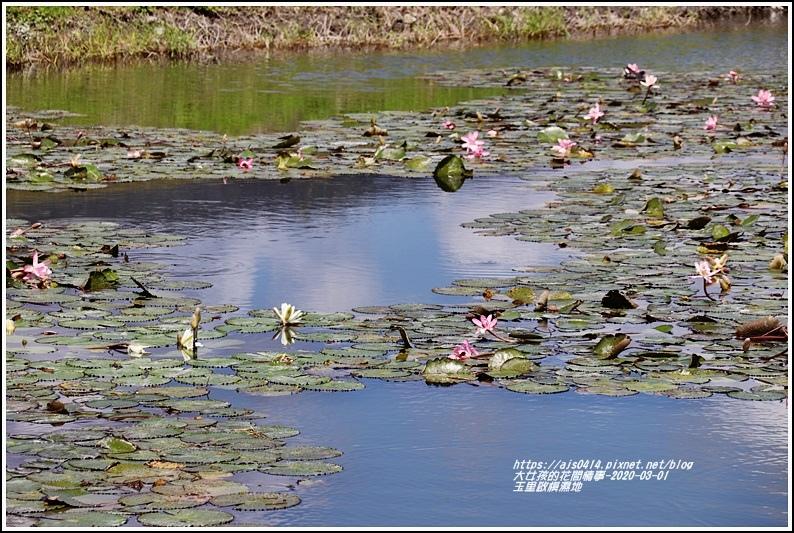 玉里啟模濕地-2020-03-21.jpg