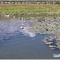 玉里啟模濕地-2020-03-22.jpg