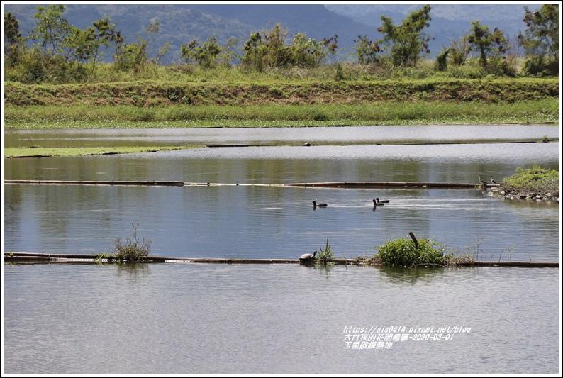 玉里啟模濕地-2020-03-34.jpg