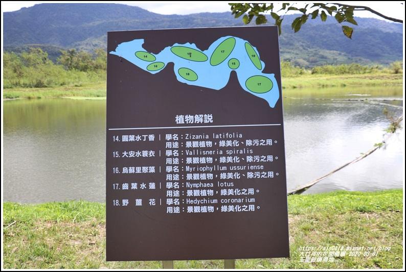 玉里啟模濕地-2020-03-42.jpg