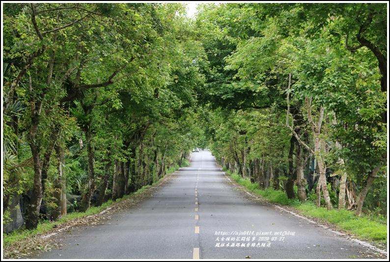 鳳林水源路楓香綠色隧道-2020-03-04.jpg