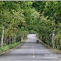 鳳林水源路楓香綠色隧道-2020-03-06.jpg