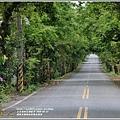 鳳林水源路楓香綠色隧道-2020-03-02.jpg