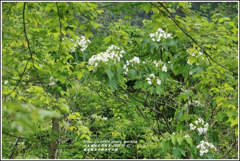 鳳林鳳義水源溪畔公園-2020-03-03.jpg