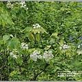 鳳林鳳義水源溪畔公園-2020-03-09.jpg