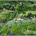 鳳林鳳義水源溪畔公園-2020-03-18.jpg