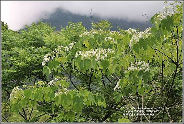 鳳林鳳義水源溪畔公園-2020-03-24.jpg