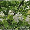 鳳林鳳義水源溪畔公園-2020-03-28.jpg