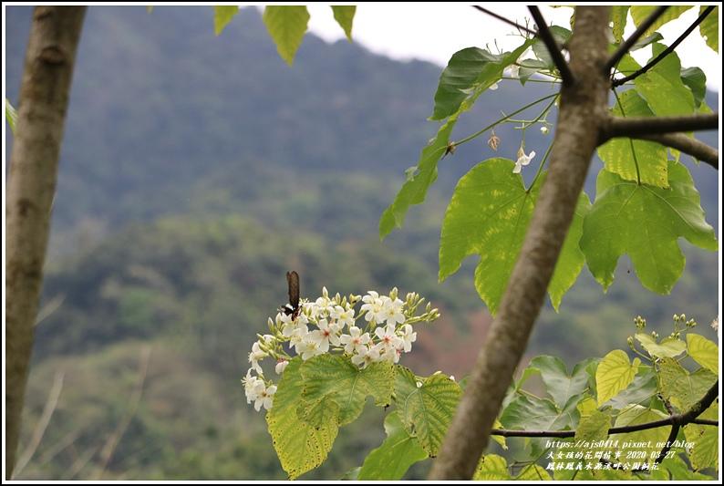 鳳林鳳義水源溪畔公園-2020-03-41.jpg