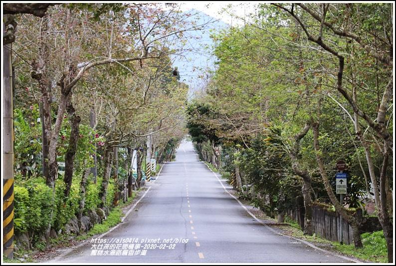 鳳林水源路楓香步道-2020-02-13.jpg