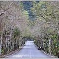 鳳林水源路楓香步道-2020-02-12.jpg