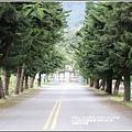 鳳林櫻花步道-2020-02-47.jpg