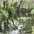 光復馬太鞍濕地-2020-04-10.jpg