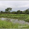 光復馬太鞍濕地-2020-04-18.jpg