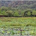光復馬太鞍濕地-2020-04-27.jpg