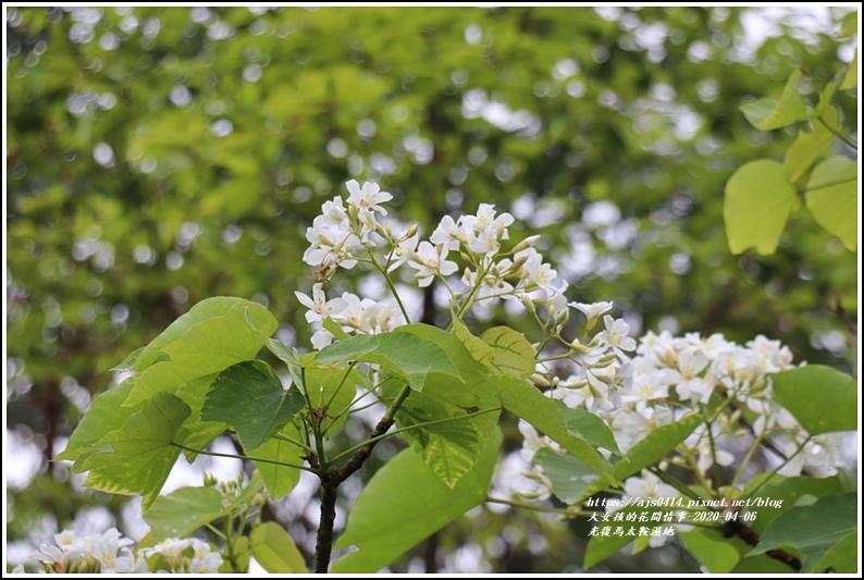 光復馬太鞍濕地-2020-04-29.jpg