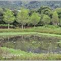 光復馬太鞍濕地-2020-04-41.jpg